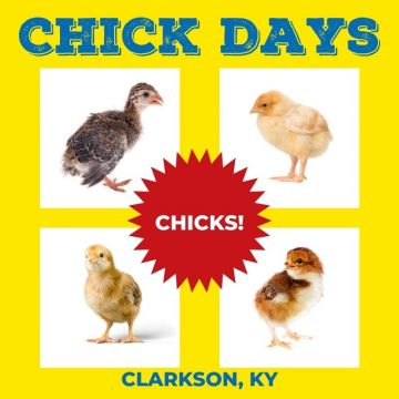 KY Chick Day - May 22, 2021
