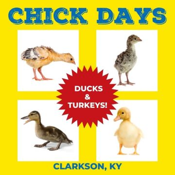 KY Chick Day - May 8, 2021