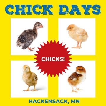 MN Chick Day - June 12, 2021