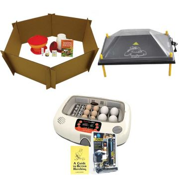Baby Chick Starter Kit With Large Comfort Chick Brooder and Rcom Incubator