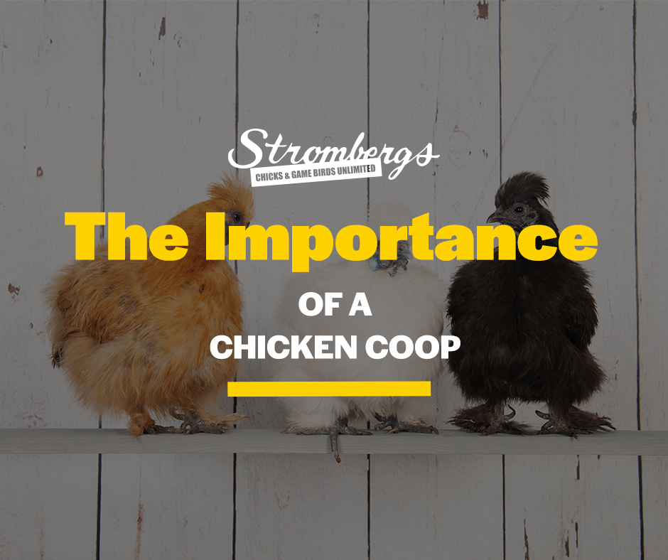 The Importance of a Chicken Coop Stromberg's Chickens