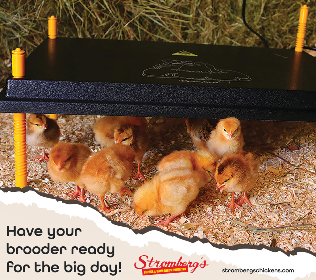 Have your chick brooder ready to go