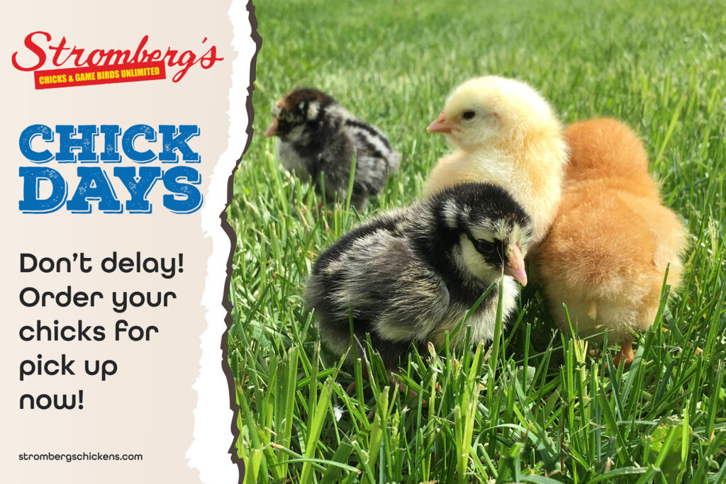 Chick Day Stromberg's Order Now